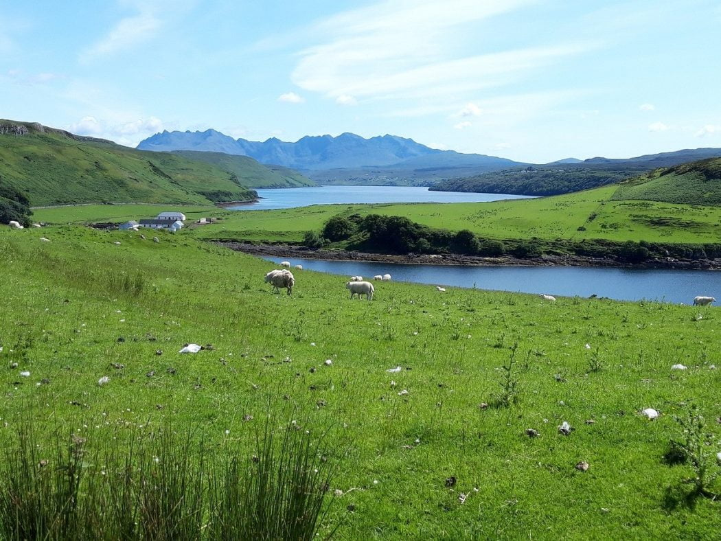 Green grass and sheep dominate the foreground. In the middle distance are the white buildings of Gesto, with a sea inlet behind. In the far background is the massif of the Black Cuillin Range. A line of jagged blue peaks along a ridge under a very light blue sky.