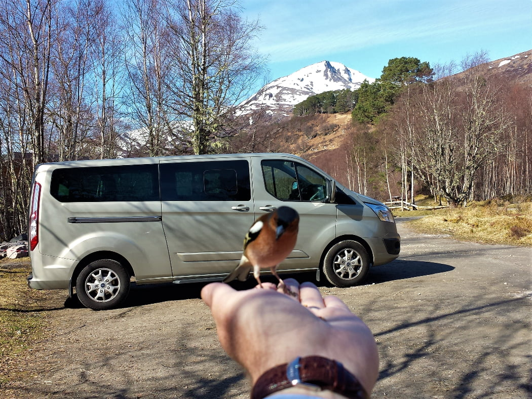 We stand in a gravel car park. The photographer's left hand can be seen, extended, palm up. On the hand is a small brightly coloured wild bird. Behind the bird is a 9-seater vehicle (side-on). There are some leafless birch trees around the car park and some pines in the background. In the distance a snow-covered peak rises into a blue sky.
