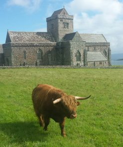 A hairy Highland Cow walks towards us through the green field in the foreground. Iona Abbey, built of grey stone, stands behind it, and the blues of sea and sky colour the background on our Hebrides – Four Day Tour