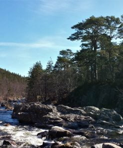 Tumbling river rapids, lots of rocks and boulders, white water and blue water all fill the foreground of this Loch Ness and Glen Affric Tour image. The banks are clothed in Caledonian pine, some small deciduous trees, and in the distance on a hill to the left, some other pines. The sky is blue.