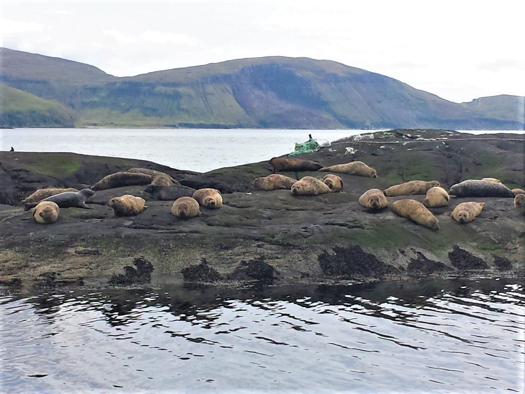 Distant Hills in the background. A colony of seals on a rocky island in the foreground.
