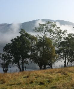 Grass occupies the near foreground, and then a single line of deciduous tress fringing a lake shore. The sky above is blue, and partially reflected in the lake, but a white early morning mist over the water obscures much. On the far shore a wodded hill rises, and at it's foot, just emerging from the mist are three towers of a castle.