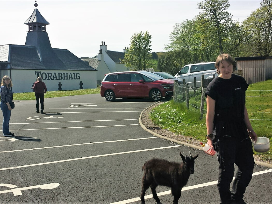 """Two people walk from the car park towards Torobhaig Distillery on our West Coast Whisky Distillery Tour. A woman in black t-shirt and trousers is in the foreground walking towards us - a plastic bowl of food in her left hand, a bottle in her right hand, and a black baby goat following the bottle. Back left are three white buildings with slate roofs and the word """"Torobhaig"""" painted large on the side. Back right are 3 vehicles in the car park, and trees behind."""