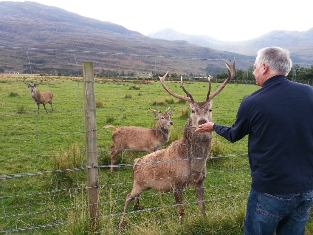 In the background, stretching across the picture, are treeless mountains. The bulk of the picture is a rough grassy field at the foot of the mountain containing three red deer stags. One of the stags is right up in the foreground four feet away but on the other side of a deer fence. It has its nose through the fence eating from the hand of a man dressed in blue.