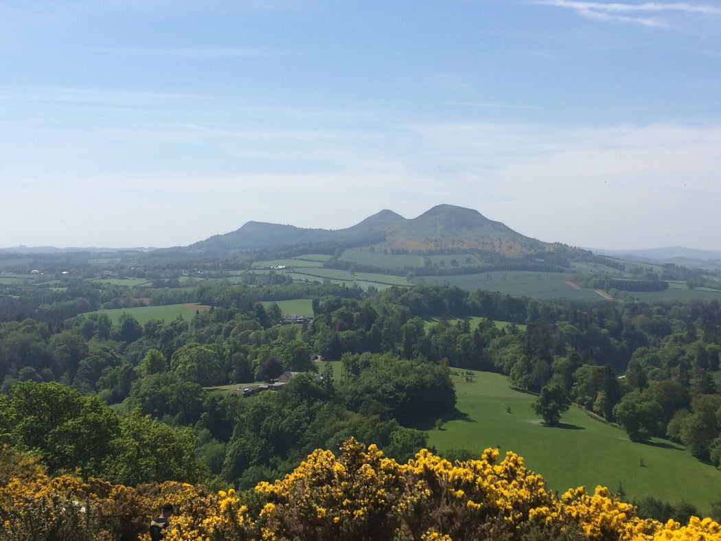 From a high vantage point on the Scottish Borders and Rosslyn Chapel Tour we see three high hills in the centre of the horizon, amidst a landscape of rolling green fields and woods. The foreground is Gorse in yellow flower and the sky is a hazy blue.