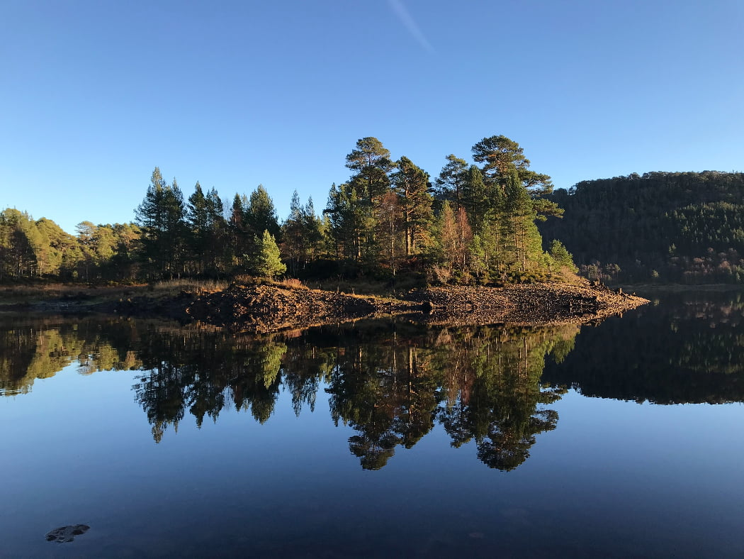 Across a still lake under a perfect blue sky we see a low rise covered by native large Caledonian Pine Trees. They are large canopy, as opposed to a pointed pine. Behind the trees to left are more pines at lake level, while behind to the right is the high hill rising from the far shore of the lake, also covered in pine forest. The whole scene is perfectly reflected in the lake.