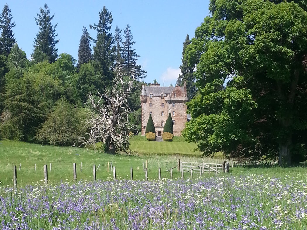 Castle Leod is the home of the chief of the Clan Mackenzie and is centrally placed in this picture, standing about three small fields away. It is a five-storey grey stone Tower House dating from the 1400's.The foreground is filled with bluebells. Across the fence in a grassy field is the dead skeleton of an enormous Spanish Chestnut tree. The castle stands on a manicured rise behind it, surrounded by large deciduous and coniferous specimin trees from many countries. The sky above is blue.